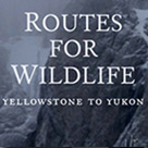 Routes for Wildlife Yellowstone to Yukon exhibition brochure